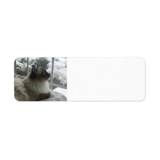 Ragdoll Himalayan Cat Kitty Snow Christmas Scene