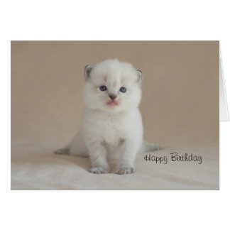 Ragdoll Kitten Card