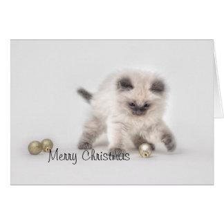 Ragdoll kitten Christmas card