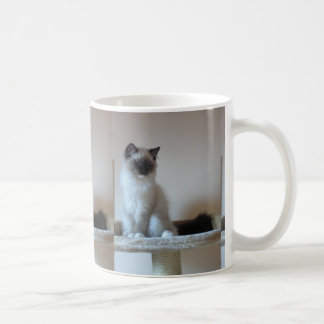 Ragdoll_kitten Coffee Mug