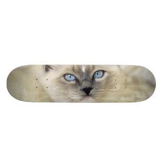 Ragdoll kitten custom skate board