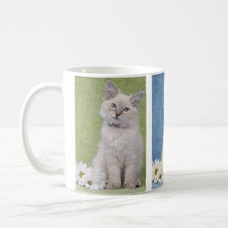Ragdoll kitten mug