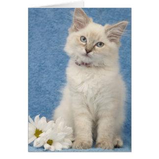 ragdoll kitten note card