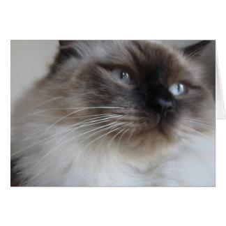 Ragdoll Kitty Card