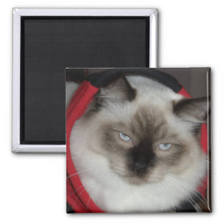 Ragdoll Kitty Magnet