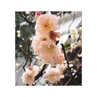 Rain Blossom Canvas Print