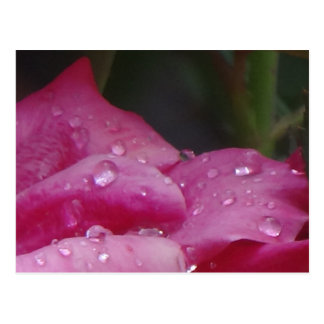 Rain Drop Flower Postcard