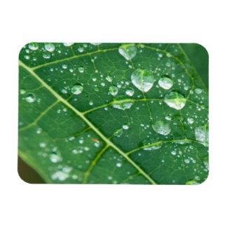 Rain Drops on Papaya Leaf Rectangular Photo Magnet