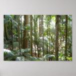 Rain Forest In Australia Print