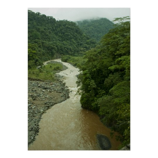 Rain Forest River Poster
