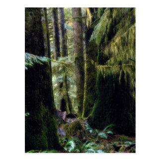 Rain forest, Tofino, British Columbia Postcard