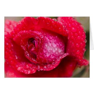 Rain on Red Rose Blank Greeting Card