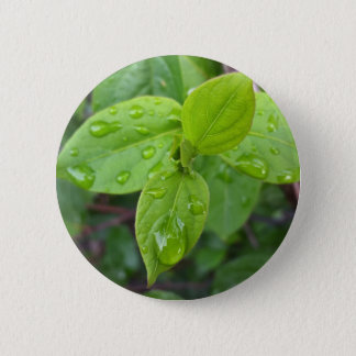 Rain over leaves 2 inch round button