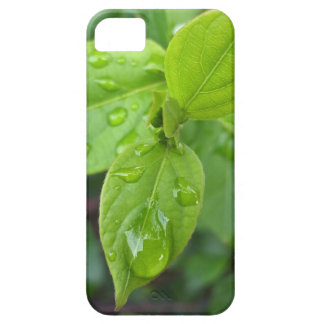 Rain over leaves iPhone 5 cover