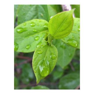 Rain over leaves letterhead