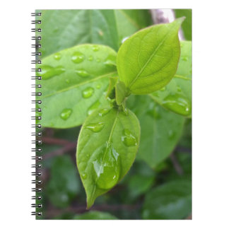 Rain over leaves notebook