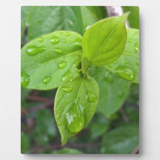 Rain over leaves plaque