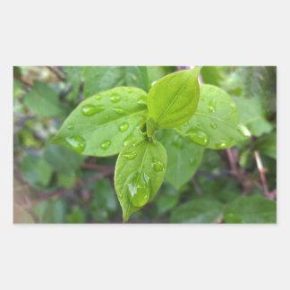 Rain over leaves sticker