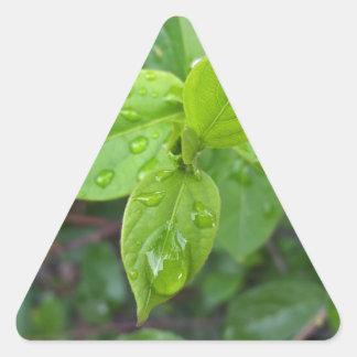 Rain over leaves triangle sticker