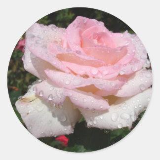 Rain -Sprinkled Rose Classic Round Sticker