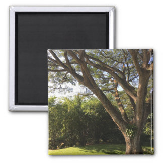 Rain Tree Magnet