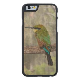 Rainbow bee-eater bird, Australia Carved® Maple iPhone 6 Case