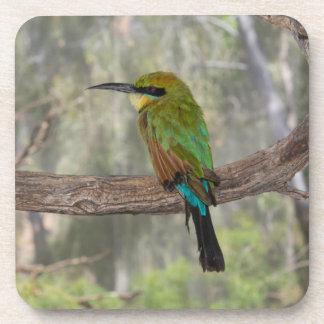 Rainbow bee-eater bird, Australia Drink Coasters