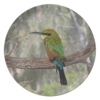 Rainbow bee-eater bird, Australia Plate