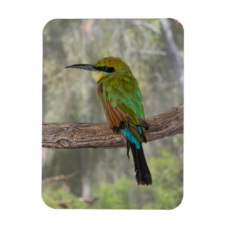 Rainbow bee-eater bird, Australia Rectangular Photo Magnet