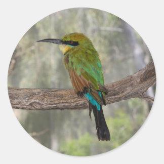 Rainbow bee-eater bird, Australia Round Sticker