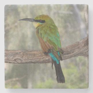 Rainbow bee-eater bird, Australia Stone Coaster
