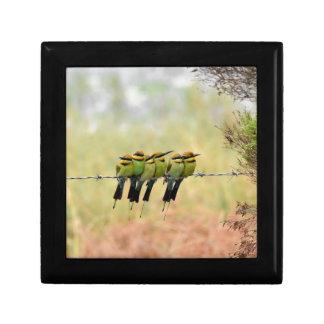 RAINBOW BEE EATER BIRD QUEENSLAND AUSTRALIA GIFT BOXES