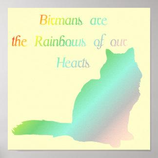 Rainbow Birman Poster