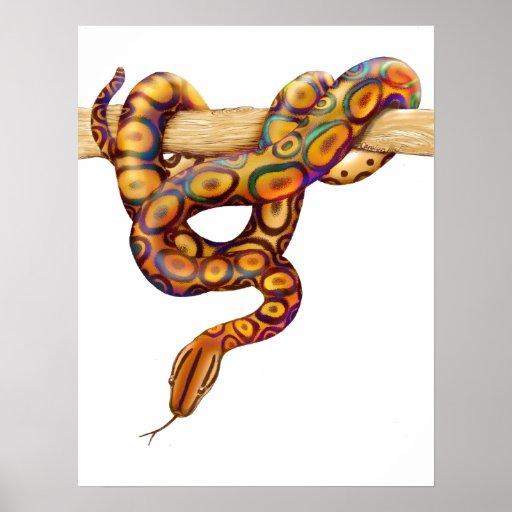 Rainbow Boa Snake Print