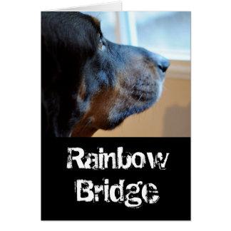 Rainbow Bridge coon hound Card