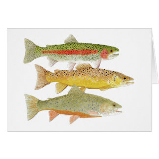 Rainbow, Brown & Brook Trout Card