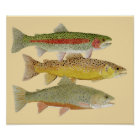 Rainbow,Brown & Brook Trout on Colourful Poster