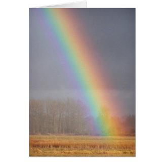 Rainbow Card 1