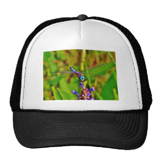 Rainbow Dragonfly and flower Hats