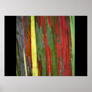 Rainbow Eucalyptus-1 Poster