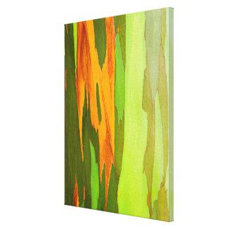 Rainbow Eucalyptus bark, Hawaii Canvas Print