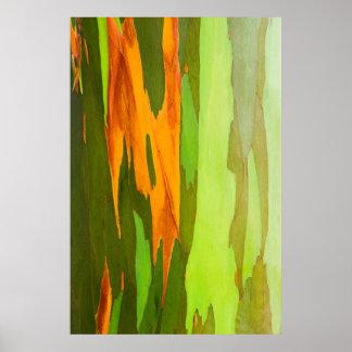 Rainbow Eucalyptus bark, Hawaii Poster