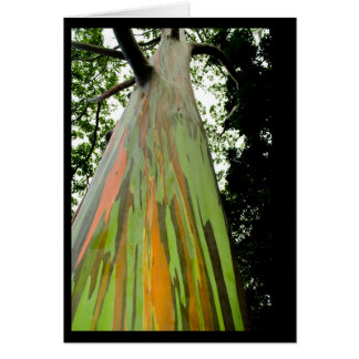 Rainbow Eucalyptus deglupta  note card
