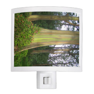 Rainbow Eucaplyptus Tree night light