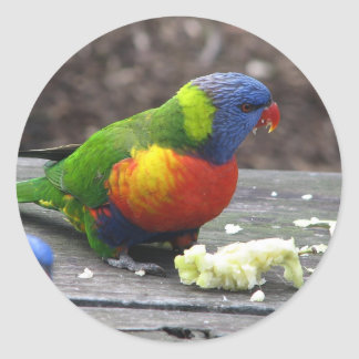 Rainbow Lorikeet Classic Round Sticker