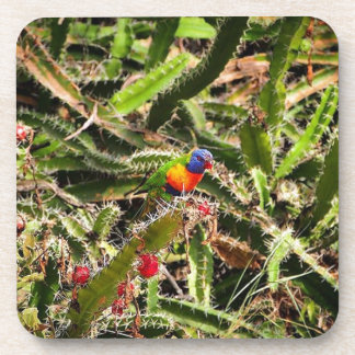 Rainbow Lorikeet in cactus drink coaster set