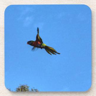 RAINBOW LORIKEET IN FLIGHT QUEENSLAND AUSTRALIA COASTER