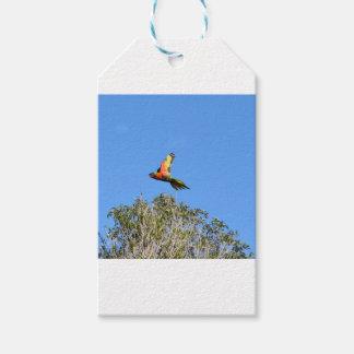 RAINBOW LORIKEET IN FLIGHT QUEENSLAND AUSTRALIA GIFT TAGS