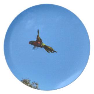 RAINBOW LORIKEET IN FLIGHT QUEENSLAND AUSTRALIA PLATE