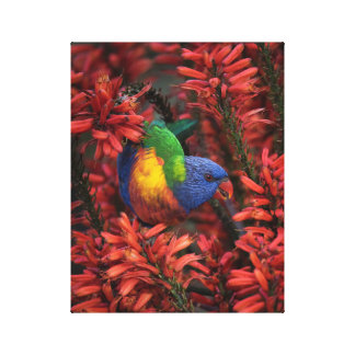 "Rainbow Lorikeet in Vibrant Red Aloe 11x14"" canvas"